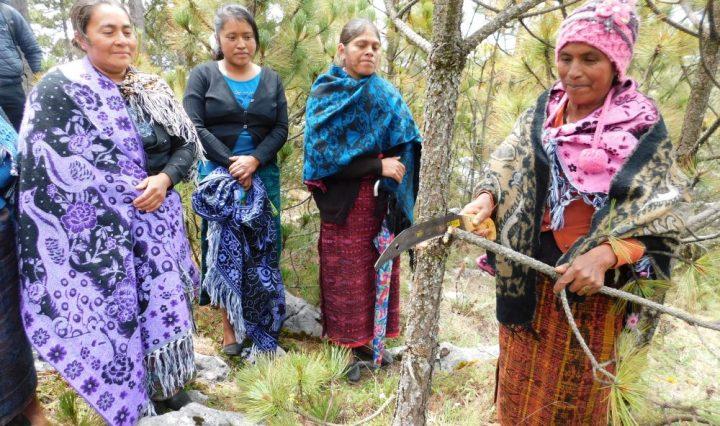 incentivos forestales 2021 INAB