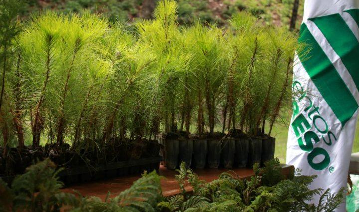 Día Mundial del Medio Ambiente Cementos Progreso