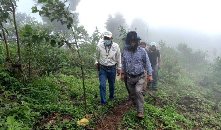 INAB incentivos forestales
