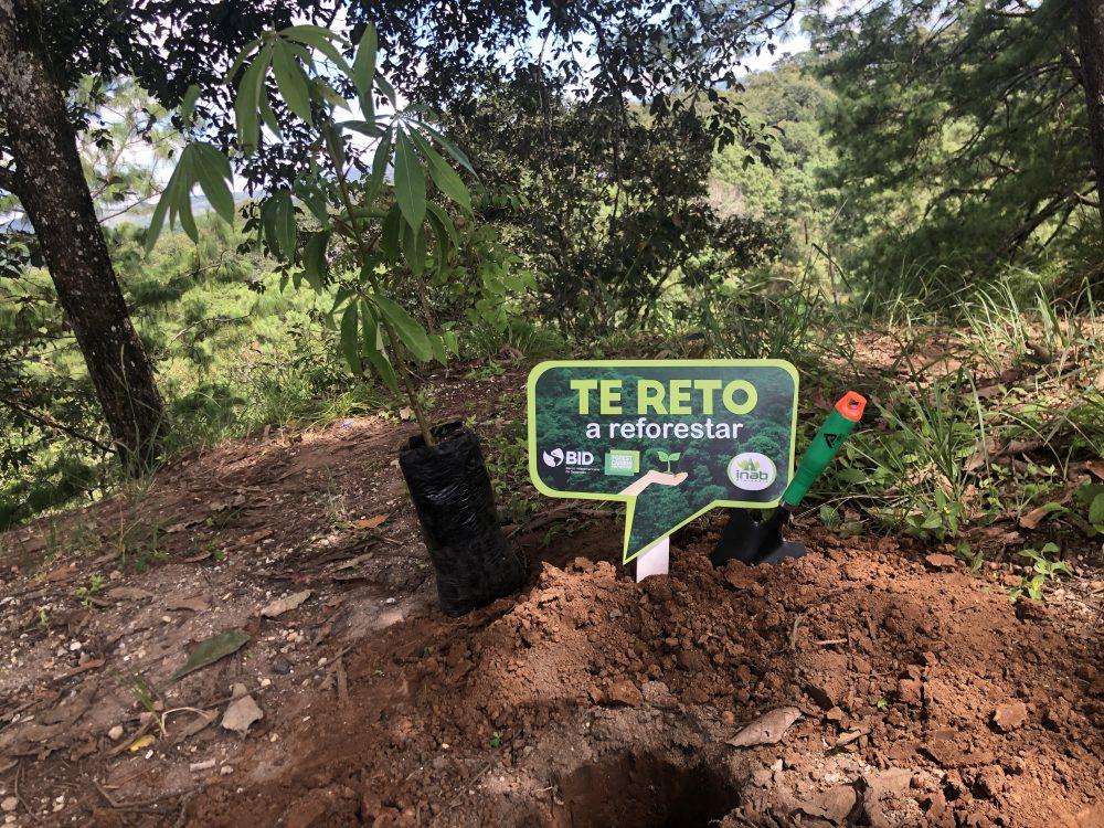 Reforestación Foragro YoReforestoChallenge inab